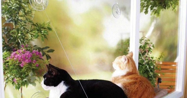 1617104479 2 16 761x400 - лучшие лежанки для кошек на 2021 год