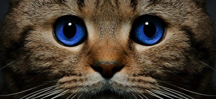 1617198246 1 87 870x400 - Топ лучших пород кошек - рейтинг 2021 года