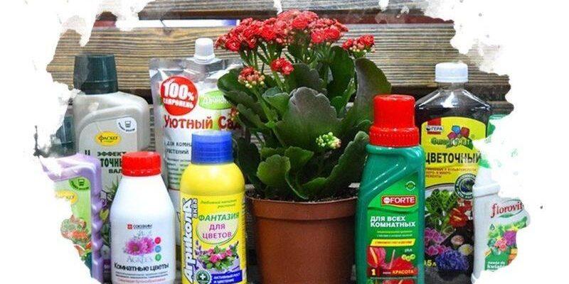 7 luchshih udobrenij dlya czvetov 601e9fa5952f3 800x400 - 7 лучших удобрений для цветов