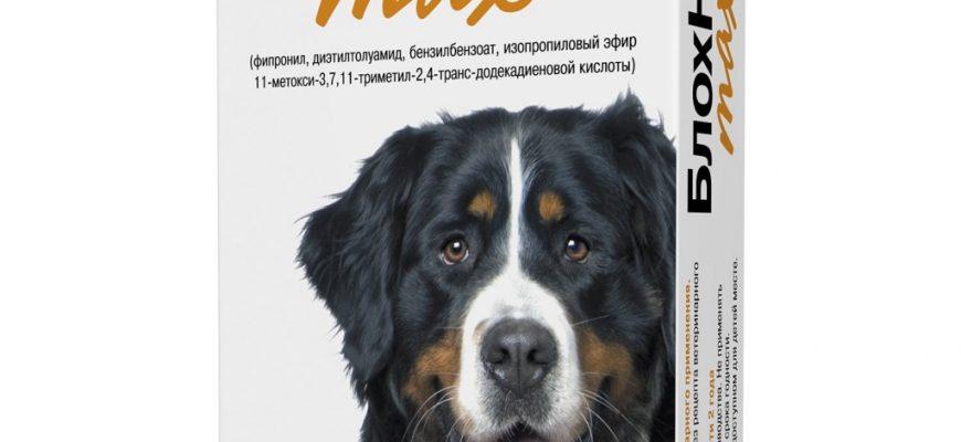 blohnet 870x400 - -10 лучших средств от блох для собак: как выбрать капли, шампуни, спреи, отзывы