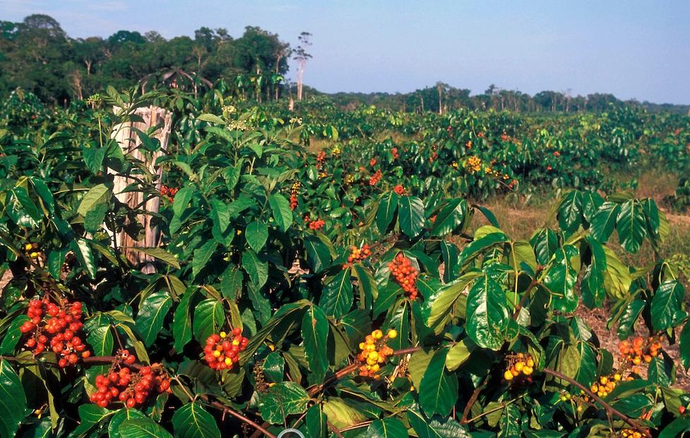 Fazenda De Gurana 1