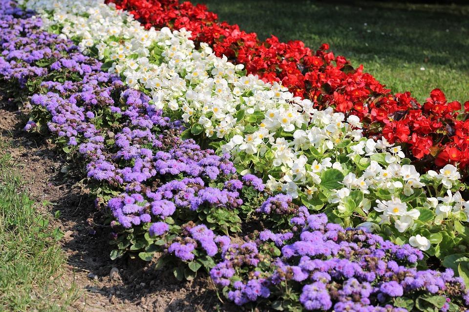 Flower Exhibition 3437084 960 720
