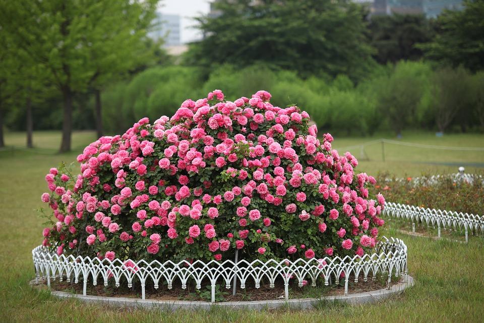 Flowers 3130025 960 720