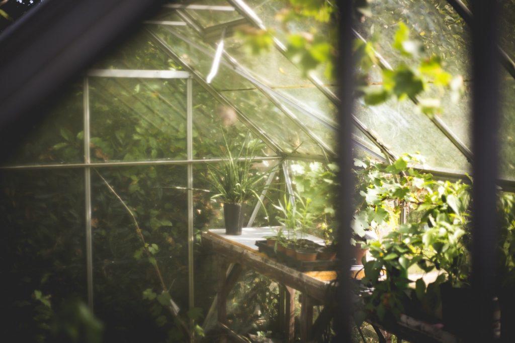 Greenhouse 691704 1920 1024x683