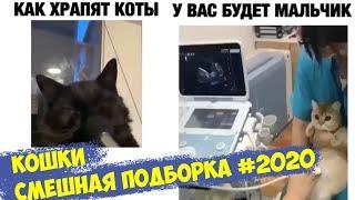 Koshki Smeshnaya Podborka 2020 E38383 5eeca3a9c05fe