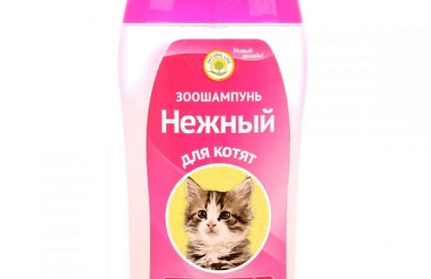 nezhnyj dlya kotyat 617x400 - Рейтинг 10 лучших шампуней для кошек: длина шерсти, какой купить, сравнение с аналогами