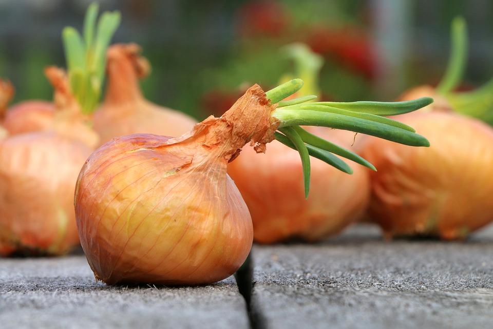 Onion 1507519 960 720