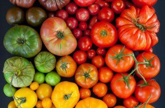 raznocvetnye pomidory 335x220 - Виды и преимущества низкорослых томатов. Топ лучшие сорта на 2021 год.