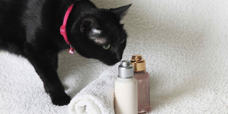 rejting top 10 luchshih shampunej dlya koshek dlina shersti kakoj kupit sravnenie s analogami 601c71c84ccb2 800x400 - Рейтинг ТОП 10 лучших шампуней для кошек: длина шерсти, какой купить, сравнение с аналогами