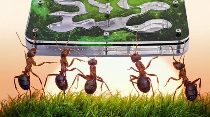 rejting top 6 muravinyh ferm tipy materialy sovety po vyboru otzyvy 602534d28f90a - Рейтинг ТОП 6 муравьиных ферм: типы, материалы, советы по выбору, отзывы